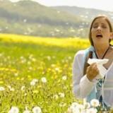 Άνοιξη, η σεζόν των αλλεργιών: 10 πράγματα που πρέπει να ξέρετε για τις αλλεργίες