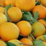Χανιά: 1.700 Ευρώ πρόστιμο επειδή πωλούσαν πορτοκάλια με κοτσάνια