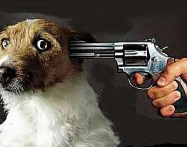 43χρονος σκότωσε το σκύλο του γείτονά του και συνελήφθη