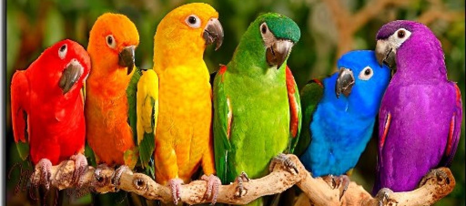 Έκλεψαν παπαγάλους από το Δημοτικό Κήπο Χανίων