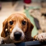 Ηράκλειο: Ο σκύλος της  την παρέσυρε  σε γκρεμό