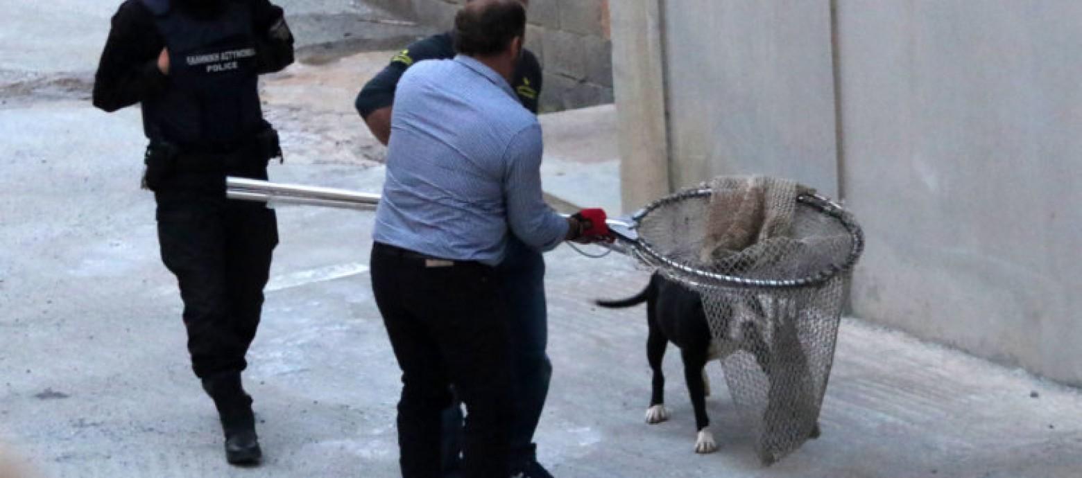 Ηράκλειο: Σκύλος επιτέθηκε σε παιδί