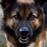 Σκύλος επιτέθηκε σε τουρίστριες στη Βιάννο