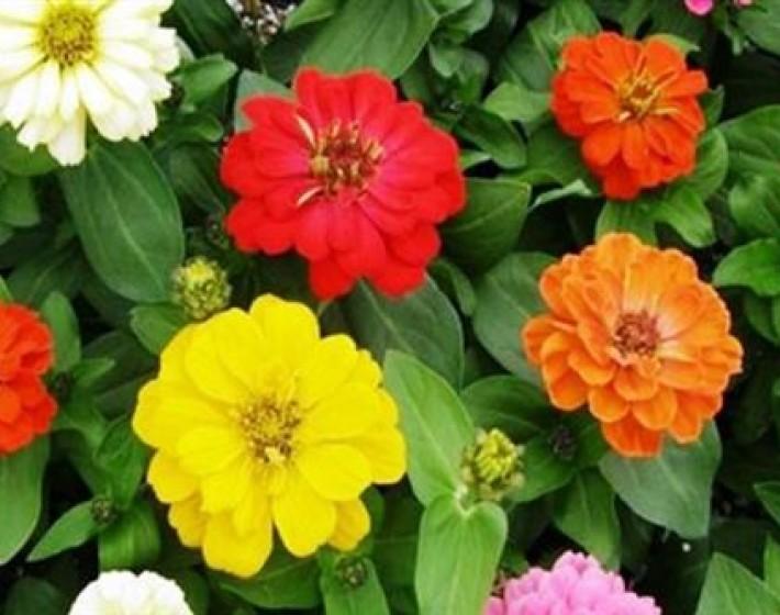 Γέμισε λουλούδια η Πλατεία Ελευθερίας στο Ηράκλειο