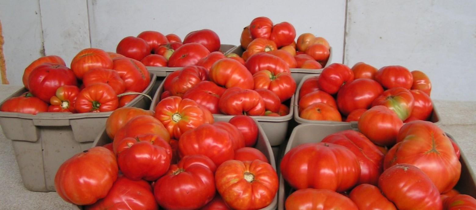 5 τόνους Ντομάτες και πιπεριές απο το Εργατικό Κέντρο Ηρακλείου
