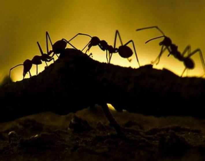 Οι κατσαρίδες και τα μυρμήγκια δεν αντέχουν με τίποτα…..