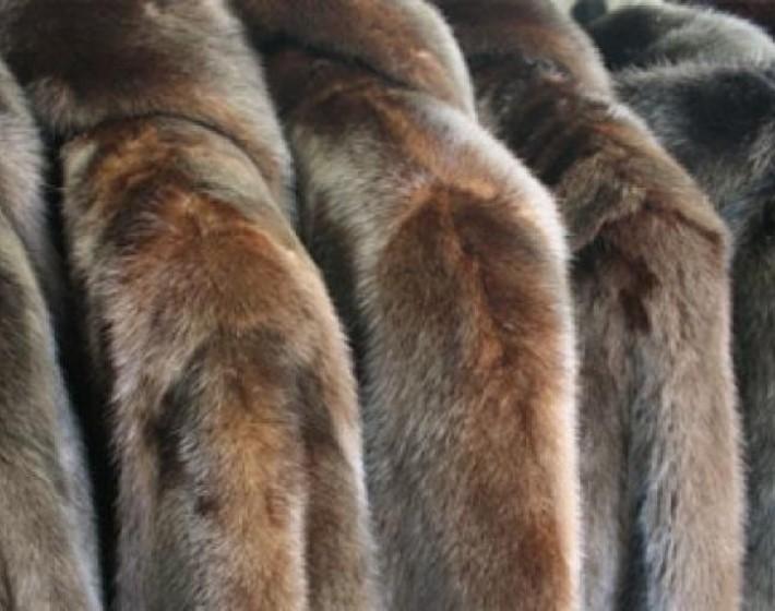 Έκλεψε γούνες αξίας 8.000 ευρώ απο επιχείρηση στη Χερσόνησο