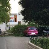 Χανιά: Δέντρο πλάκωσε αυτοκίνητο