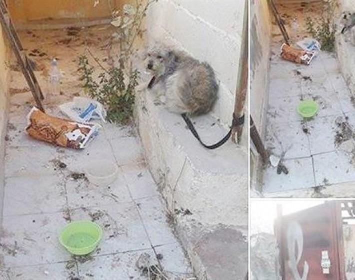 Ενα σκυλάκι δεμένο σε σωλήνα κάπου… στα τείχη του Μαρτινέγκο