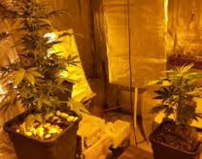 25χρονος Ρεθυμνιώτης καλλιεργούσε κάνναβη στο σπίτι του