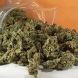 Συνελήφθη για ναρκωτικά στα Χανιά-Κατασχέθηκαν 90 γρ. κάνναβης