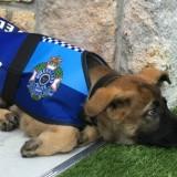 Σκύλος της αστυνομίας «έχασε» τη δουλειά του γιατί ήταν πολύ παιχνιδιάρης!