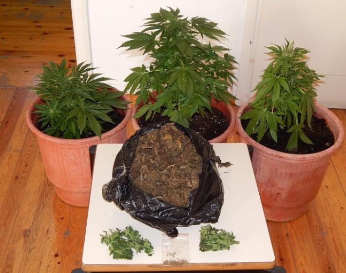 Ηράκλειο: Καλλιεργούσε κάνναβη στην αυλή του σπιτιού του