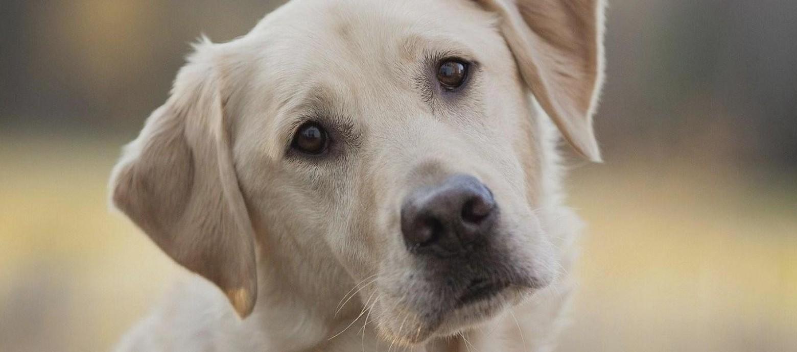 Καύσωνας κρατήστε τον σκύλο σας ενυδατωμένο – 35 ποτίστρες για σκυλιά και γάτες  στην Αθήνα