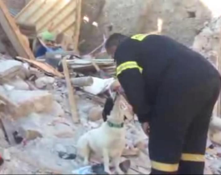 Μυτιλήνη: Η σκυλίτσα της 43χρονης  Ελένης δεν έφυγε λεπτό από τα χαλάσματα(video)